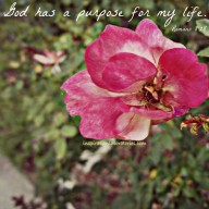 God Has A Purpose For My Life