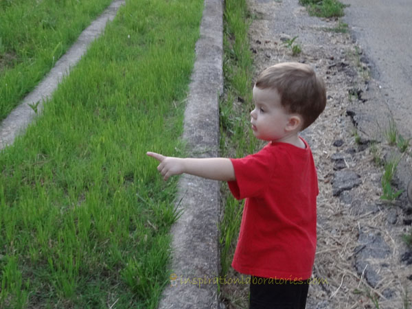 pointing at cattails