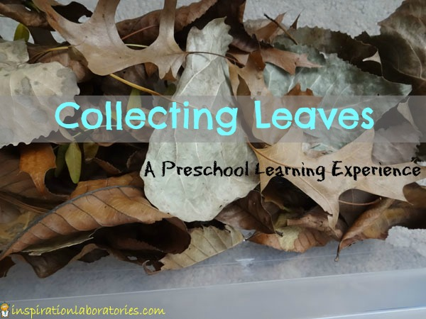 Collecting Leaves: a Preschool Learning Experience