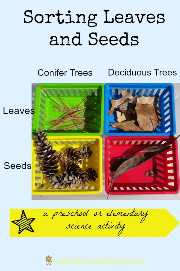 Sorting Leaves and Seeds
