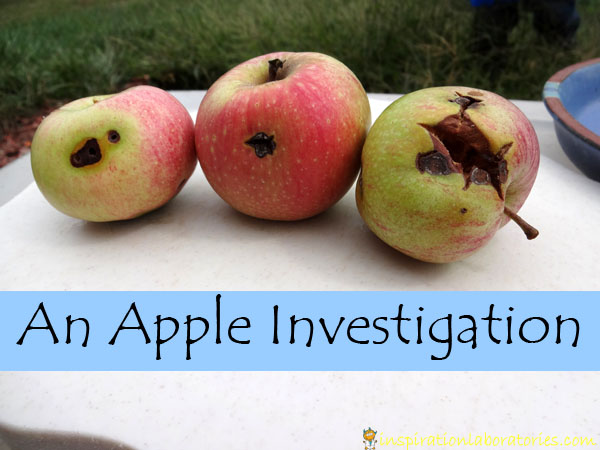 apple investigation