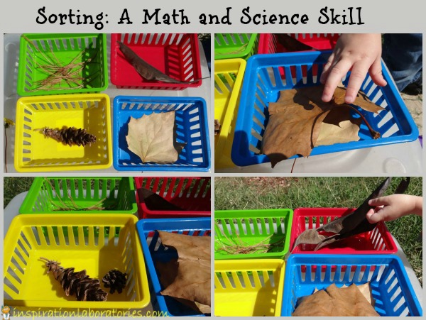 Sorting: A Math and Science Skill