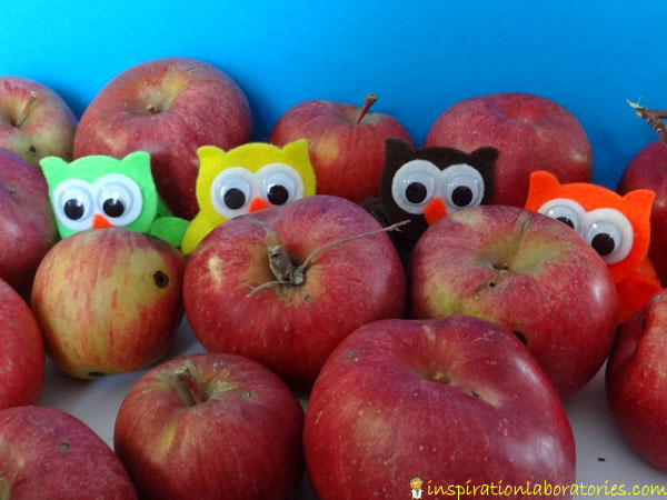 owls in apples