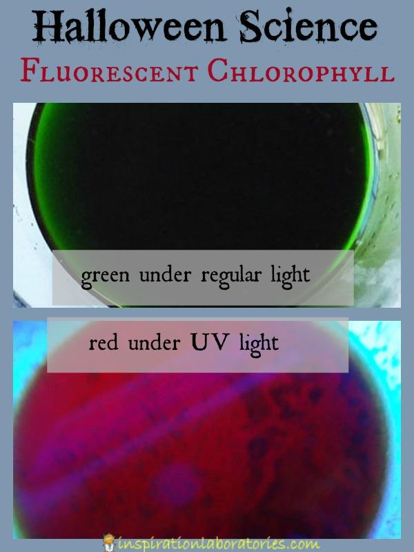Halloween Science: Fluorescent Chlorophyll