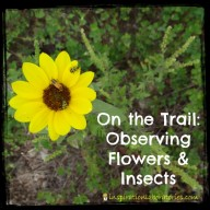 On the Trail: Observing Flowers and Insects