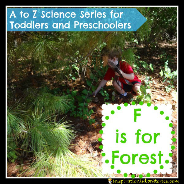 F-is-for-forest