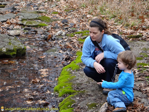 Forest Lessons: observing the creek