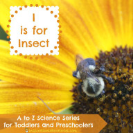 I is for Insect Investigations