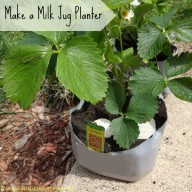 Make a Milk Jug Planter