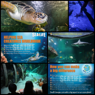 Sea Life Aquarium and Ocean Education