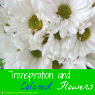 Transpiration and Colored Flowers