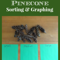 Pinecone Sorting and Graphing