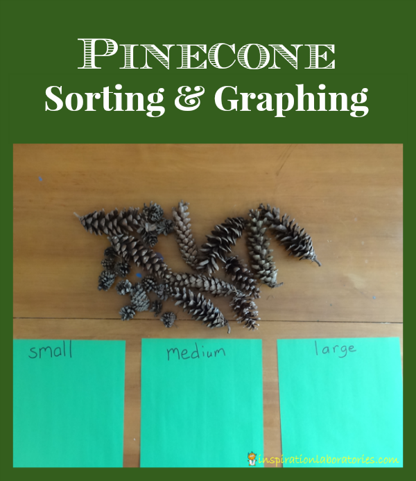 Pinecone Sorting & Graphing - Day 13 of our Christmas Science Advent Calendar