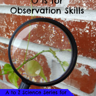 O is for Observation Skills
