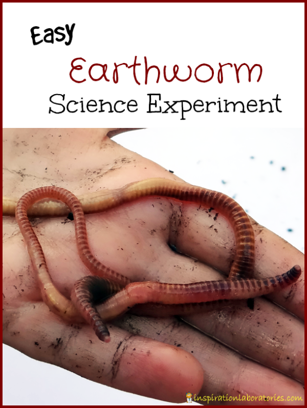 Earthworm Science Experiment - Set up an easy experiment to test the preferences of earthworms. Several experiment ideas are listed.