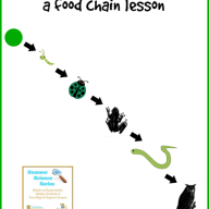 Ecology for Kids: Food Chain Lesson {Summer Science Series}