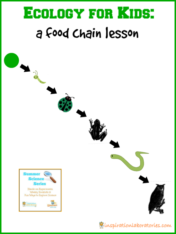 Ecology for Kids: Food Chain Lesson