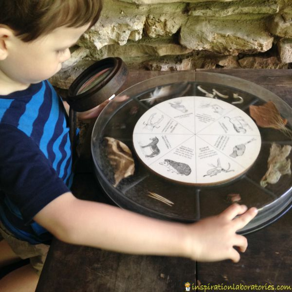 zoo interactive