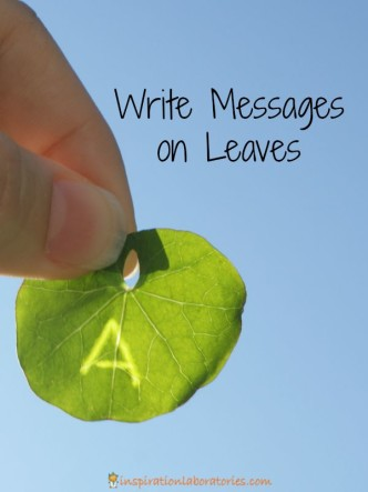 Write messages on leaves.
