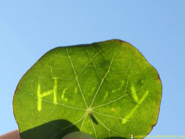 leaf messages