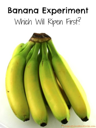 Which banana will ripen first? This banana experiment is easy for kids to set up.