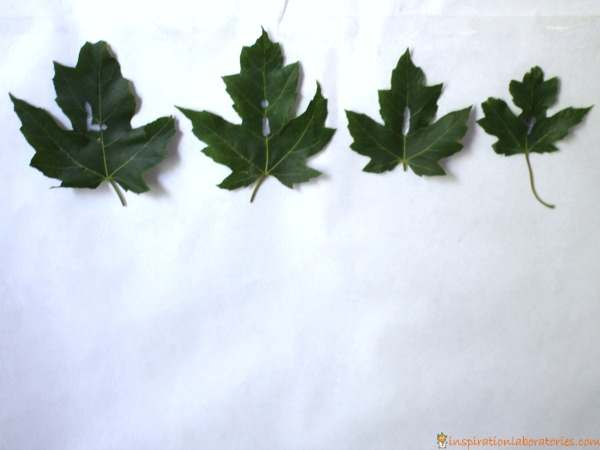 leaf-name-activity1