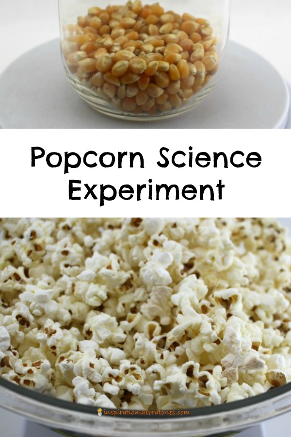 Does popped popcorn weigh the same as unpopped kernels? Conduct this popcorn science experiment to find out.