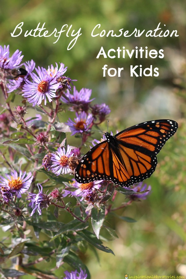 Try these butterfly conservation activities for kids to learn about butterflies and their habitats.