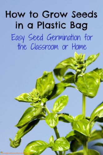 How to grow seeds in a plastic bag - easy seed germination for the classroom or home