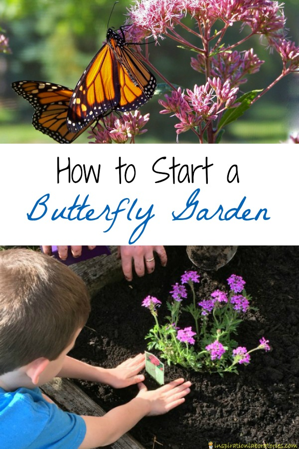 How to start a butterfly garden inspiration laboratories - How to start a mini garden ...