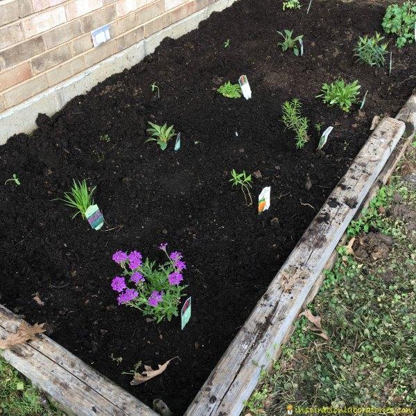 How to start a butterfly garden