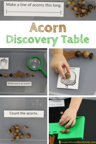 Set up an acorn discovery table to practice math and science skills for preschool or early elementary.
