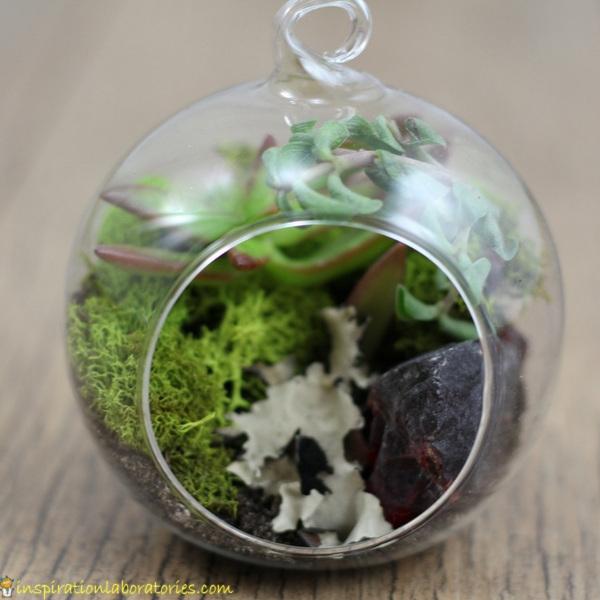 terrarium ornament with succulents, soil, moss, and lichen