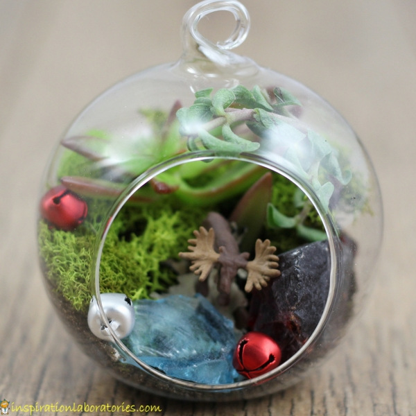 Make a terrarium ornament with succulents and a variety of decorations.