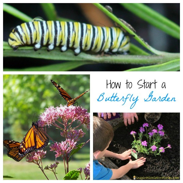 Exceptionnel Tips And Resources For Starting A Small Butterfly Garden At Home. Here Are  Some Easy ...