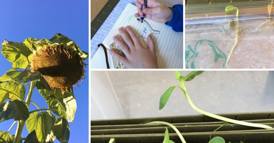 Gardening with Kids: Make a Plant Journal | Inspiration Laboratories